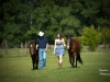 walking the horses